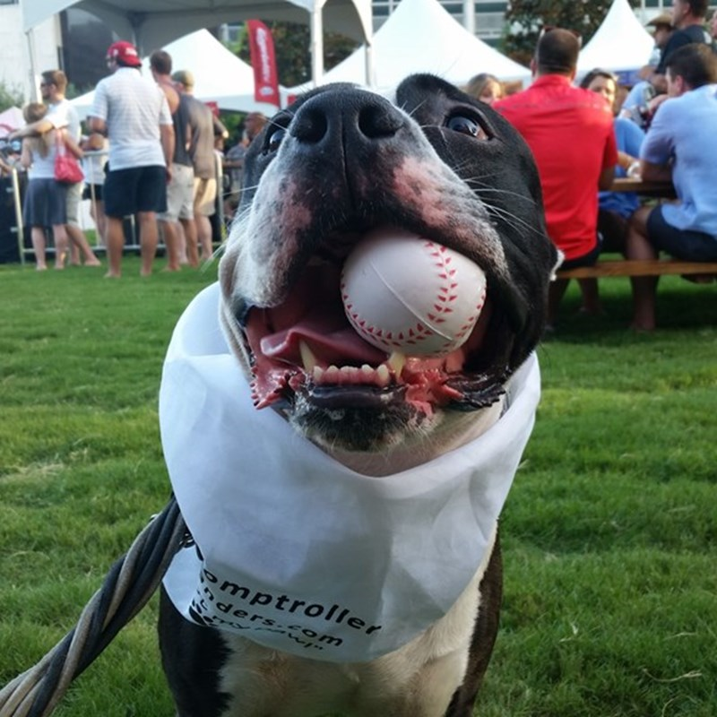 Even man's best friend knows who the right candidate is for the job. vote4sanders.com — at 2nd Annual Summer SausageFest.