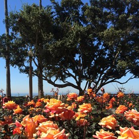 Everything's coming up Roses in Palisades Park.