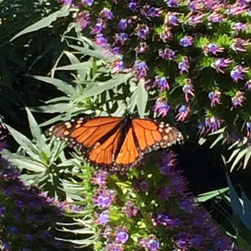 It's Butterfly time in Palisades Park.