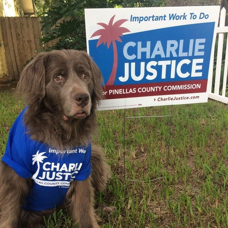 Addison (four legged family of our lead volunteer Allison) representing the team colors