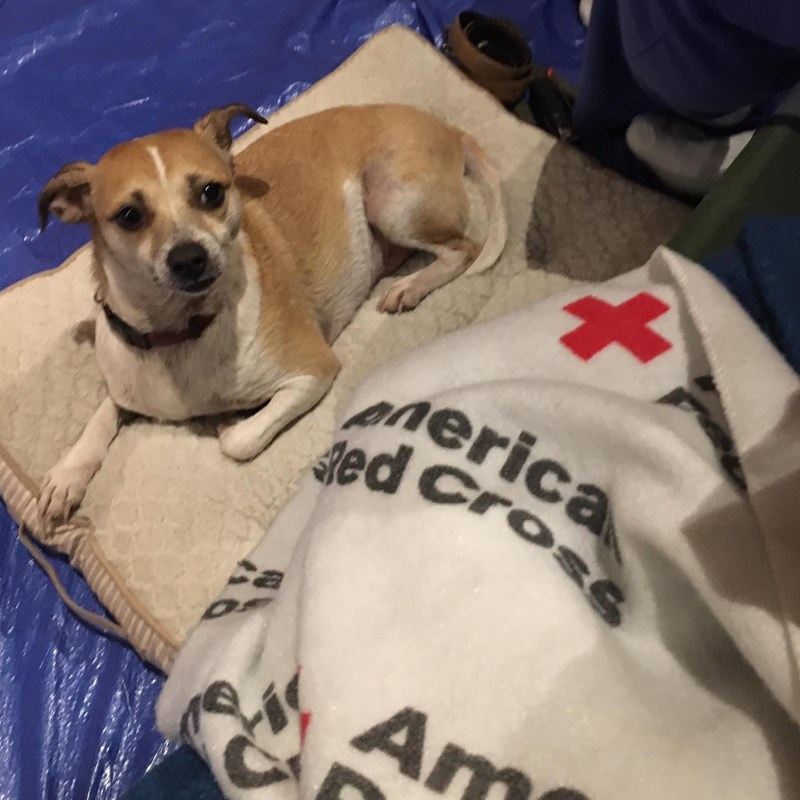 Animal friend evacuated in the Sebastopol Red Cross shelter during 2019 Flood.