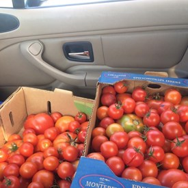 Spent a hot, hot afternoon harvesting tomatoes with farming friends near St. Joseph, who are generous enough to share with local food pantries. I picked 6 boxes to drop off this month. I love being able to connect resources with people who need services in Champaign County.