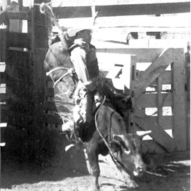 Bill Polyniak bull riding in California