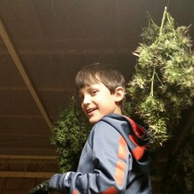 Colten Polyniak hanging hemp to dry.