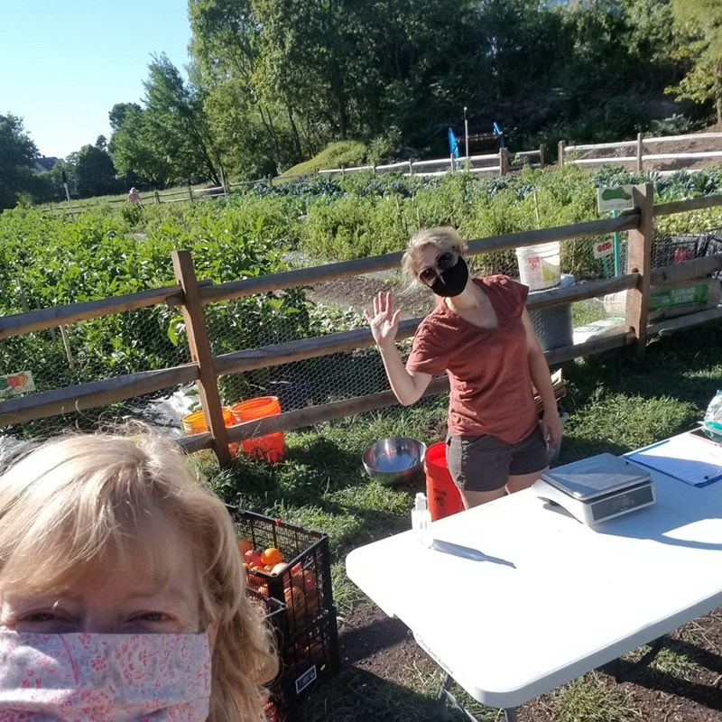Mack Park Food Farm, giving fresh produce to our community on Saturdays for free!