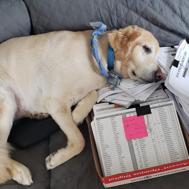Hunter,  our canine campaign coordinator scientifically choosing the next election district to be walked.