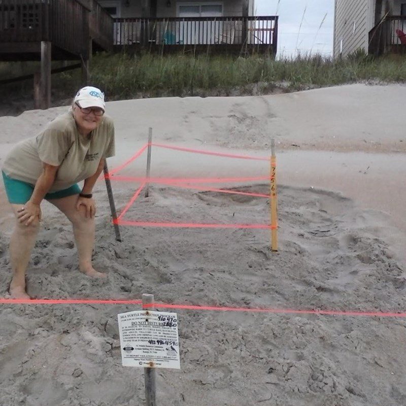 Protecting the Sea Turtles as a volunteer for the Karen Beasley Rehabilitation Center.